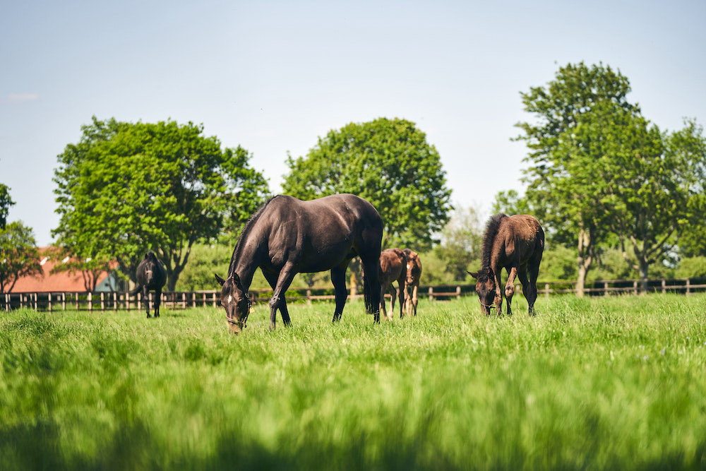 <p>Level One Diploma in Work Based Thoroughbred Care</p>