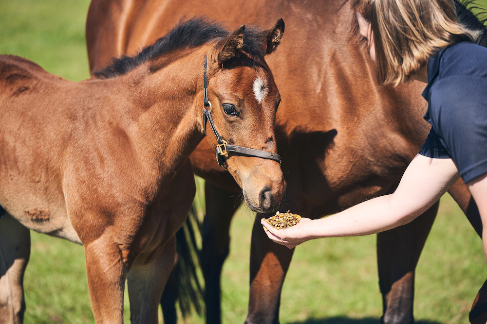 <p>Level Two Diploma in Work Based Horse Care (Breeding Option) </p>
