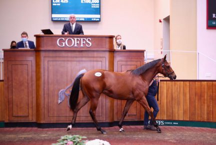 <p>Bay Filly ex SUNNY AGAIN (Shirocco) | Purchased at Goffs Orby Sale 2020 for £100,000 by Harvey Bloodstock for Highland Yard</p>