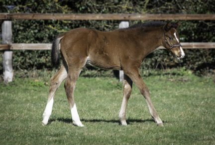 <p>Bay Colt ex SNAKE'S HEAD (Golden Snake), half-brother to 7 time winner and Listed placed STAXTON – at 6 weeks old</p>