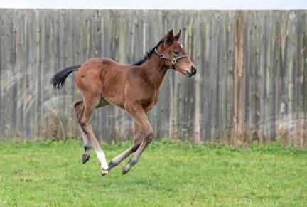 <p>Bay Filly ex FLIGHT TO FANCY (Galileo) at 4 weeks old</p>