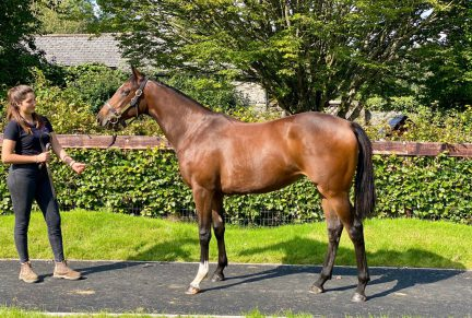 <p>Bay Filly ex ZANZIBAR (In The Wings) | Purchased at Goffs Orby Sale 2020 for £130,000 by Grove Stud</p>