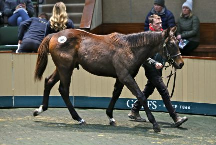 <p>Bay Colt ex STEP SEQUENCE (Nayef) | Purchased at Goffs November Foal Sale 2019 for €95,000 by Tally-Ho Stud</p>