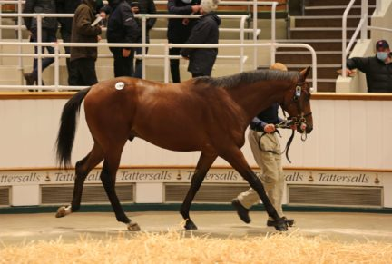 <p>Bay Colt ex TEBEE'S OASIS (Oasis Dream) | Purchased at Tattersalls October Yearling Sale Book 2 2020 for 120,000gns by Shadwell Estate Company</p>