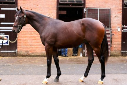 <p>Bay Colt ex TALENT SPOTTER (Exceed And Excel) | Purchased at Tattersalls October Yearling Sale Book 2 2020 for 95,000gns by Amanda Skiffington</p>