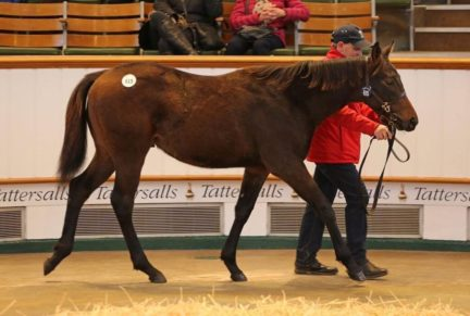 <p>Bay Colt ex CASTER SUGAR (Cozzene) | Purchased at Tattersalls December Foal Sale 2019 for 62,000gns by Jamie Railton Sales Agency</p>