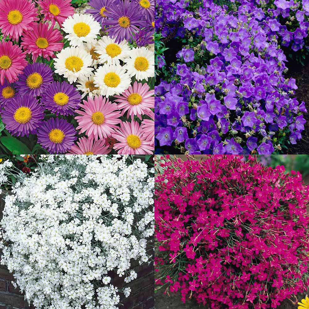 Buy Ground Cover Perennial Plant Collection J Parkers
