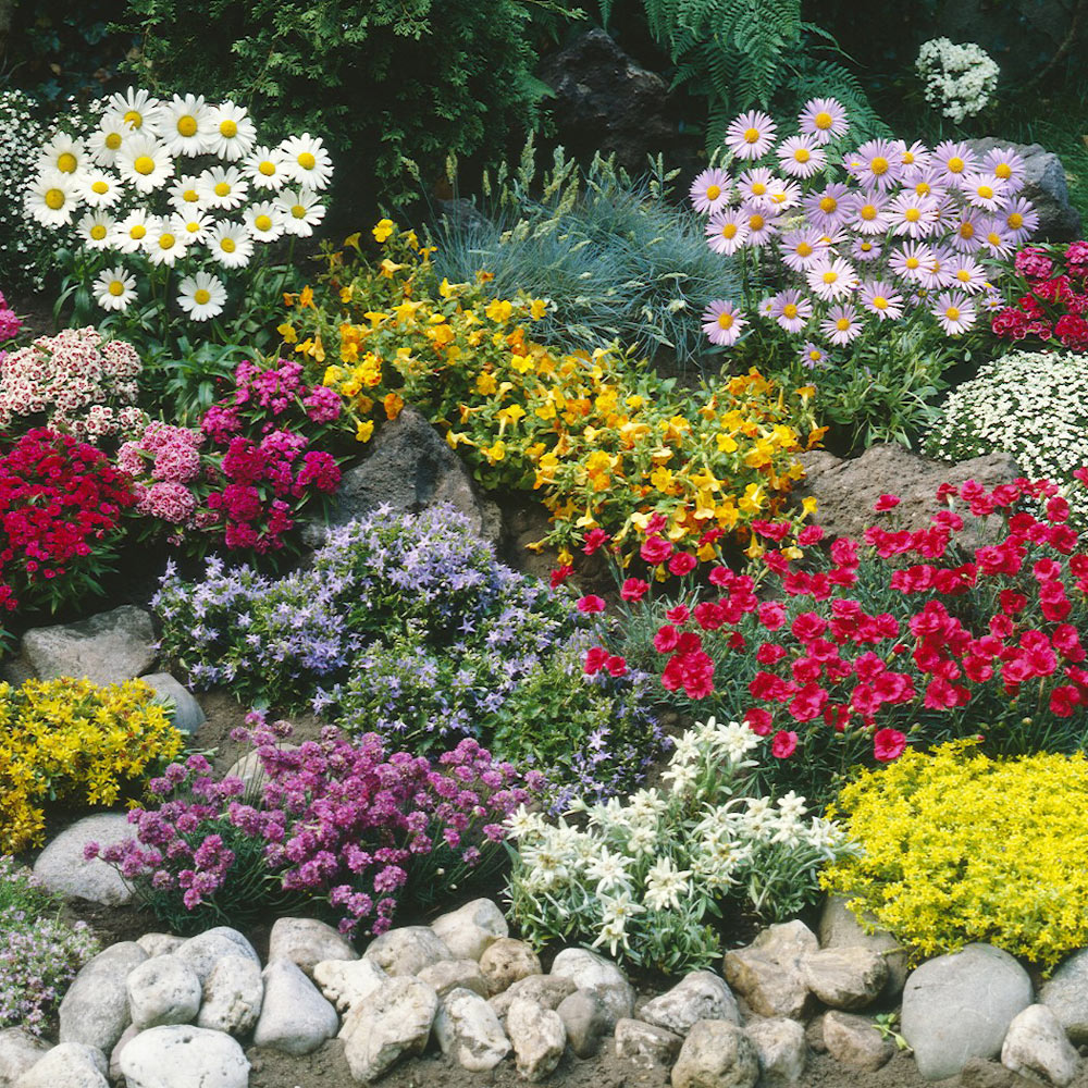 Buy Ground Cover Plant Collection J Parkers