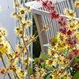 Hamamelis Witch Hazel Collection
