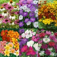 Summer Perennial Mixtures Collection