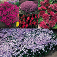 Ground Cover Plants Collection