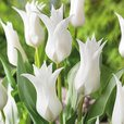Tulip Fluted Bargain Collection 10/11cm