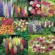 Cottage Garden Plants Collection