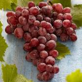 Vitis Suffolk Red (Seedless Grape)