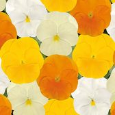 Pansy Orange & Lemons Mixed (Garden Ready)