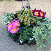 Mixed Floral & Foliage (Pre-Planted Basket)