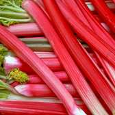 Rhubarb Suttons Seedless