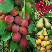 Complete Orchard Fruit Collection