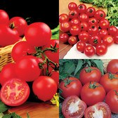 Tomato Award Winning Collection