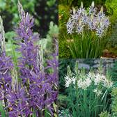 Camassia Collection