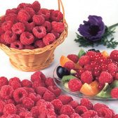 Raspberry Malling Jewel (Mid Season)