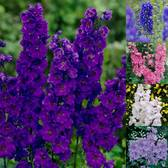 Giant Delphiniums Collection (Power-Module)