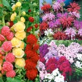 Cottage Perennial Collection