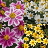 Bidens Rare and Unusual Collection