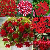 Summer Red Trailing Basket Collection