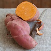 Sweet Potato Erato Orange