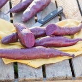 Sweet Potato Erato Violet