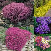 Alpine Complete Perennial Collection
