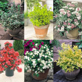 Bestselling Shrub Collection