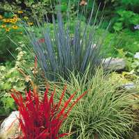 3 Ornamental Grasses