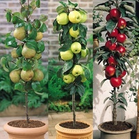 3 Miniature Patio Fruit Trees Collection