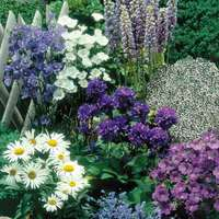 24 Blue and White Perennial Border