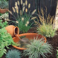 4 Ornamental Grass Collection