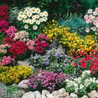 6 Ground Cover Perennial Collection