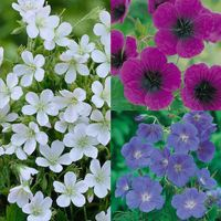 9 Hardy Geranium Collection