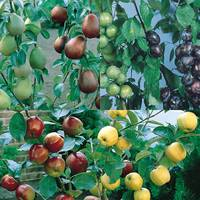 3 Dual Fruit Trees Collection