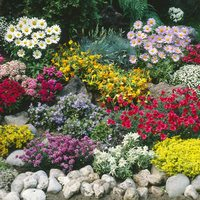 12 Ground cover Perennials