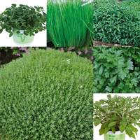 6 Herb Garden Collection 1