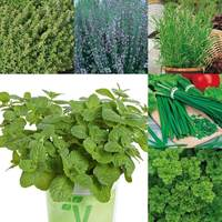 6 Herb Garden Collection 2