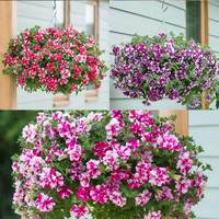 18 Petunia Tumbelina Bicolour Collection