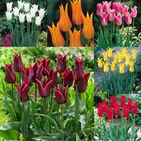60 Fluted Tulips Collection
