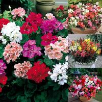 132 Bedding Plant Essential Collection