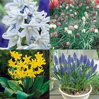185 Spring Naturalising Bulbs