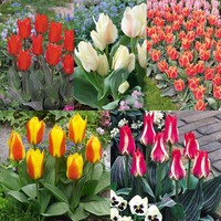 75 Tulip Dwarf Rockery Greigii Collection