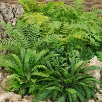 Ferns Mixed
