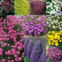 30 Alpine Perennial Collection
